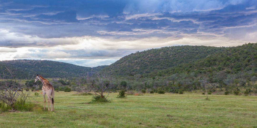 Welgevonden – An African Wilderness Reborn