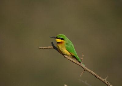 bird wtaching south africa