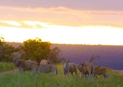 nedile lodge south africa