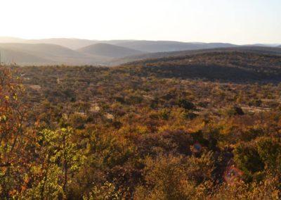 safari big 5 nedile south africa
